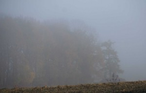 Brouillard - chemins de campagne